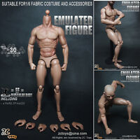 ZC Toys 1/6 Scale Muscular figure Body