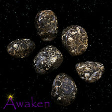 *ONE* TURRITELLA AGATE Natural Tumbled Stone Approx 15-20mm *TRUSTED SELLER*