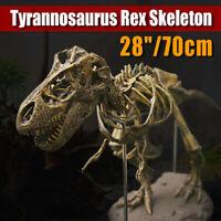 Altura Rex Tiranosaurio Esqueleto Dinosaurio Animal Coleccionista Decoración