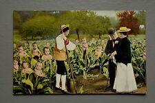 R&L Postcard: Comic Novelty, Farming Multi Babies, Cabbage Leaves, Doff Bros