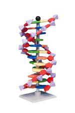 Molymod Mini DNA Model 12 Base Pair Layer Kit Educational