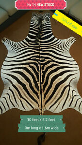 Zebra Skins Hides 30% OFF SALE  A Grade PLUS Free shipping NEW Stock !!!