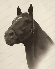 8x10 Print Man O War Greatest Thoroughbred of All Time Portrait #MOW99