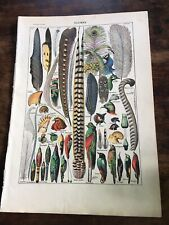 Vintage Original French Natural History feathers Larousse Book Plate/ Print