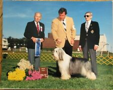 Bearded Collie / Beardie 1980 Champion Dog Show 8 x 10 Photograph- Camden County