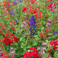 Hummingbird Garden Mix Heirloom Seeds -Non-GMO - Untreated - Open Pollinated!