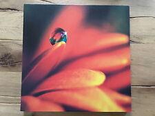 Bild Tropfen Gerbera 30x30 #3 Leinwandbild Fotodruck Leinwand orange rot Blume