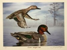 """Brad Thompson """"Green-Winged Teal"""" 10"""" x 14"""" signed print. Number 11 of 250"""
