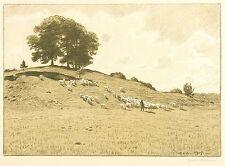 Hans Richard von popolo Mann-pastore con gregge di pecore II-farblithografie 1915