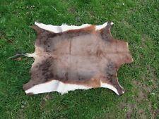 Trés belle peau, cape de blesbok damalisque à front blanc chasse taxidermie