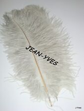 "10 SILVER OSTRICH FEATHERS 10-12""L"