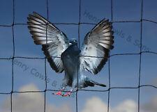 "Garden Anti Bird Netting Heavy Duty Net Strong Pigeon Cat Run 2"" Mesh 5 X 20M UK"