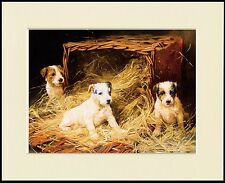 WIRE FOX JACK RUSSELL TERRIER PUPPIES LOVELY DOG PRINT MOUNTED READY TO FRAME
