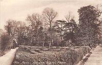 POSTCARD   LONDON  Hampton  Court  Maze