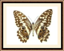 Butterfly 8534, Cross Stitch Kit