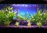 3 P Micro Sword Carpet Freshwater Lilaeopsis Novaezelandiae Live Aquarium Plant