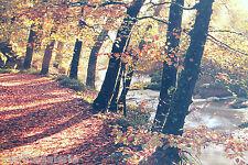 automne feuilles bois Broceliande déco poster photo panoramique fabr. Bretagne