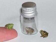 1 miniature fairy tube Bottle w/ ity bity Tiny baby Frog loose locket Screw Cap