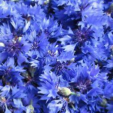 Blaue KORNBLUME 200+ Samen CENTAUREA CYANUS Bienenweide BAUERNGARTEN Blumenwiese