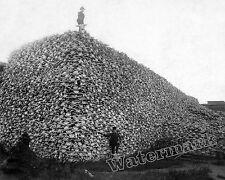 Historical 1870c Photograph Western Pile Bison Skulls Used for Fertilizer 8x10