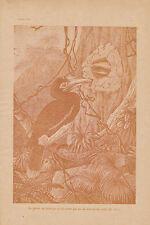 Gravure ancienne musée du jeune naturaliste  oiseaux éxotique