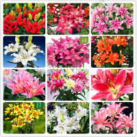 Mixed Colors 200 PCS Seeds Pink Purple Plants Flowers Bonsai Flores Home Garden