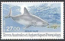 Fsat/TAAF 1998 cailón Tiburón/Tiburones/Marine/Naturaleza/Vida Salvaje/peces 1v (n33549)