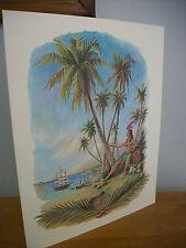 1971 Philippine Coconut Palm Christmas Card Print by John Beadle
