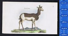 Nanguer-Antelope 1801 Mammal Color Antique Lithograph