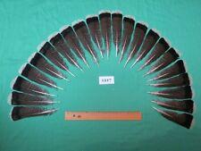 22 pcs  Bronze Turkey Tail  Feathers (Long 16-20cm/Fiber 40-45mm)(1217)