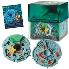 Ein-O Science BioSigns Animal Cell (Ages 7+) 3D Biology Puzzle
