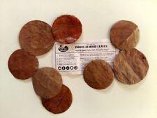 100 Premium Indian Almond Leaf HALOS | Catappa Ketapang | Naturally Aged & Dried