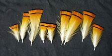 10 Golden Pheasant feathers .25 - 2