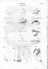 Stampa antica OCCHIO BOCCA NASO ORECCHIO disegno di anatomia 1848 Old print Rome