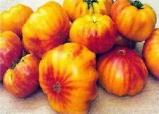 Heirloom Tomato Seeds 25 Virgina Sweet Tomato Seeds