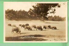 #C. Postcard - Buffalo Herd, Golden Gate Park, San Francisco