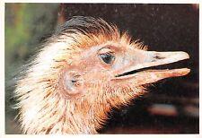 B9002 Animals Animaux Paraguay testa de Avestruz