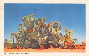 Prickly Pear Cactus Desert Flowering Cactus Vintage 1940s Linen Postcard L13