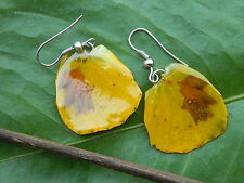 REAL Monarch Butterfly Wings Earring Jewelry 925 Sterling Yellow NOBEL Stunning!
