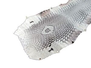 PELGIO Genuine Cobra Hood Snake Skin Leather Soft Hide Pelt Natural Handicraft
