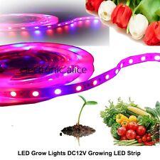 5M LED Strip Plant Grow Light Hydroponic Aquarium Lamp Red Blue 3:1 DC 12V 5050