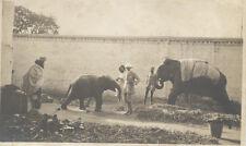 ORIGINAL VINTAGE PHOTOGRAPH OF MAN TOURING ELEPHANT COMPOUND W/ HANDLERS