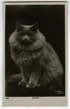 c 1910 Long Hair Haired Fluffy Persian Dignity Cat British photo postcard