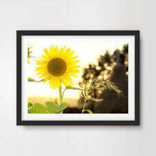 Bright Yellow Sunflower FLOWERS FLORAL PHOTOGRAPH ART PRINT Decor Wall Picture