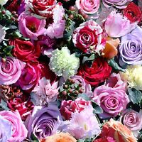 Roses Floral Papier Peint Rouleaux - Muriva J97010 - Rouge & Rose Neuf Fleurs