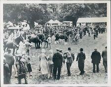 1934 Horse Judging Agricultural Show Tring Park Hertfordshire  Press Photo