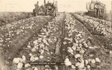 Antique Picture Postcard DIGGING POTATOES IN MAINE Unposted Farm Machinery