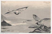 Birds, M. Andreossi, 1903 Art Postcard #3, B558