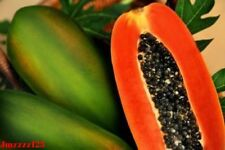 50 Red Papaya Paw Paw Dried Fresh Seeds - Fast Growing And Highly Productive