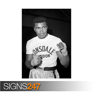 MUHAMMAD ALI POSTER BOXER CASSIUS MARCELLUS CLAY (2135) Celebrity Poster Poster